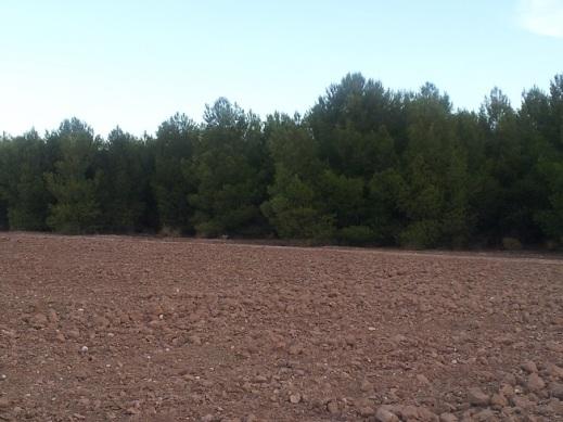 forestación de tierras agrarias