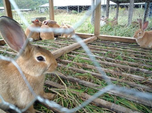 Conejos granja