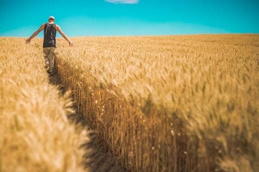 ayudas-seguro-agrario-castilla-la-mancha