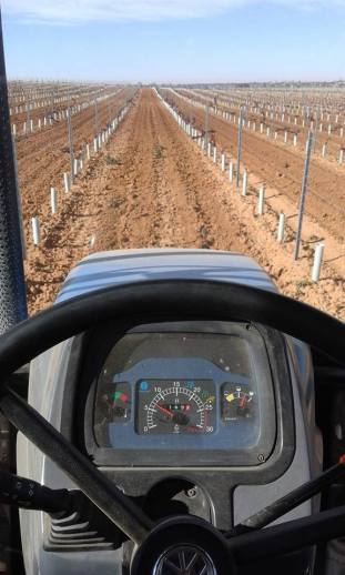 autorizaciones nuevas plantaciones viñedo