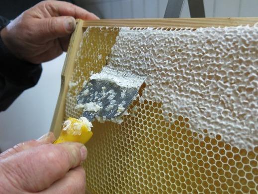 ayudas apicultura Castilla-La Mancha 2017