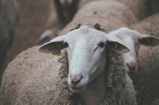 ayudas ganadería Castilla La Mancha
