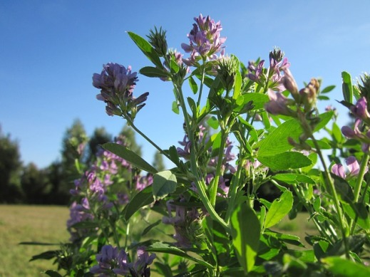 ayudas agroambientales castilla-la mancha herbaceos secano erosión arómaticas biodiversidad