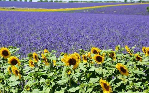 ayudas agroambientales Castilla-La Mancha
