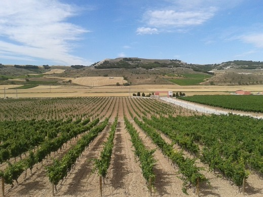 Plan Nacional de Apoyo al Sector Vitivinícola