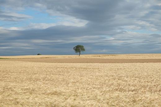 ZEPAs esteparias Castilla La Mancha