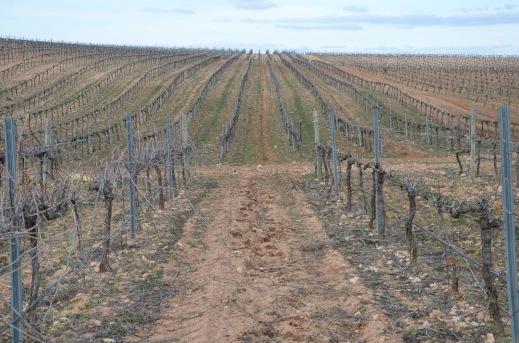 Reestructuración de viñedo Castilla-La Mancha
