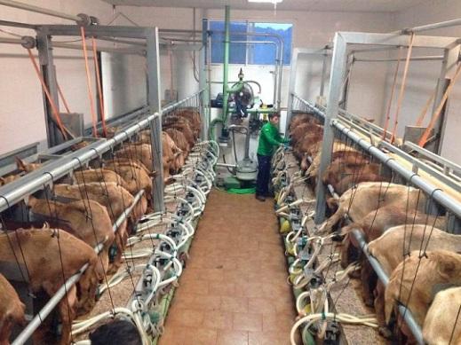 Situación mercado leche ovino y caprino