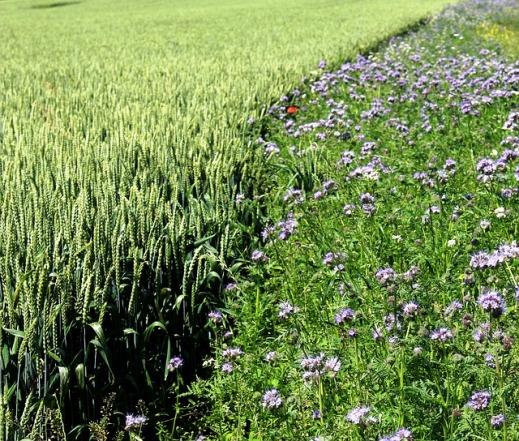 Ayuda Agroambiental herbáceos de secano