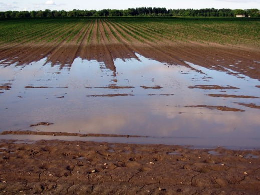 ayudas temporales explotaciones agrarias