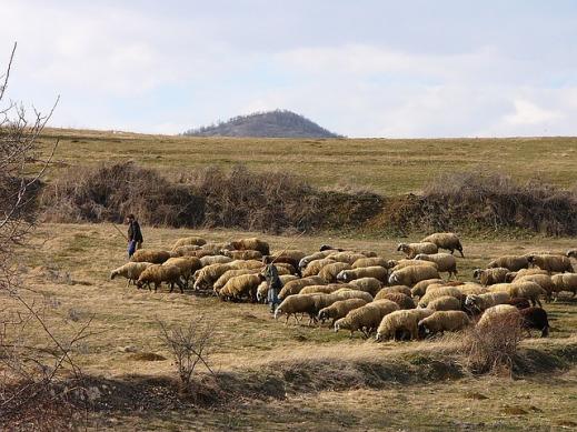 Ayudas acopladas ovino y caprino 2016