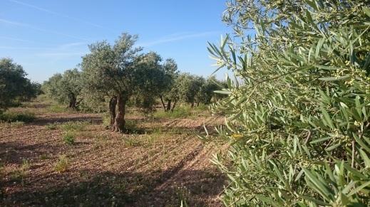 Precios aceite de oliva