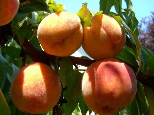 crisis fruta dulce