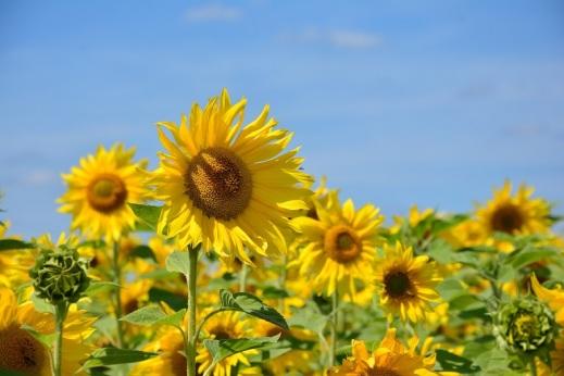 Seguro de herbáceos extensivos