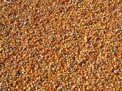 Cereal derecho importación