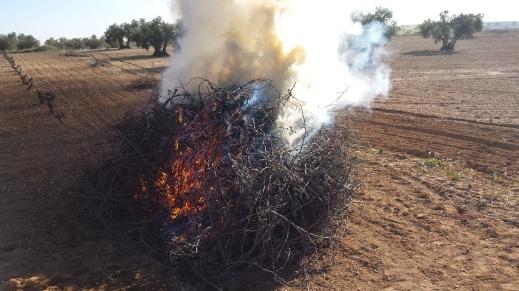 quema restos agrícolas