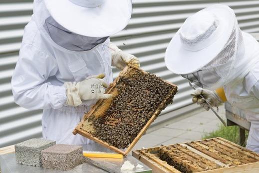 ayudas sector apícola