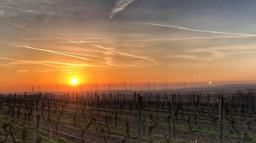 Autorizaciones nuevas plantaciones viñedo 2018