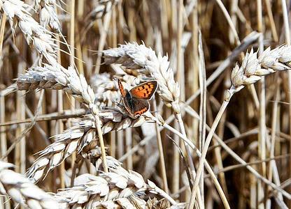 nuevo reglamento de agricultura ecológica