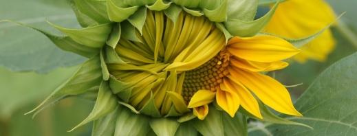 Seguros agrarios herbáceos extensivos