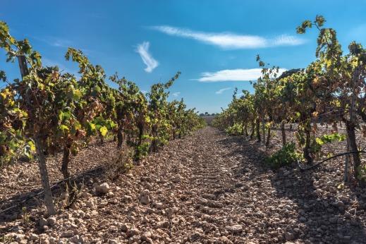 Autorizaciones nueva plantación viñedo