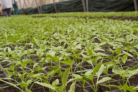 ayudas jóvenes agricultores inversiones explotaciones