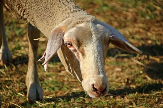 Seguro de retirada y destrucción de animales