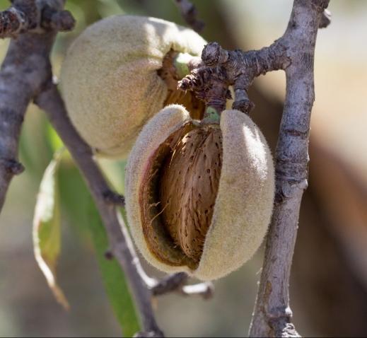 ayuda asociada frutos cáscara