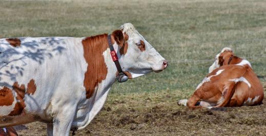 Ayudas asociadas vacuno de leche