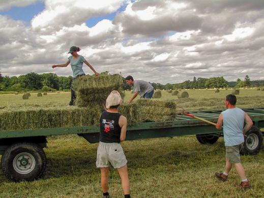 Ayudas Jóvenes Agricultores e inversiones