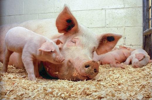 Enfermedades Animales Transfronterizas