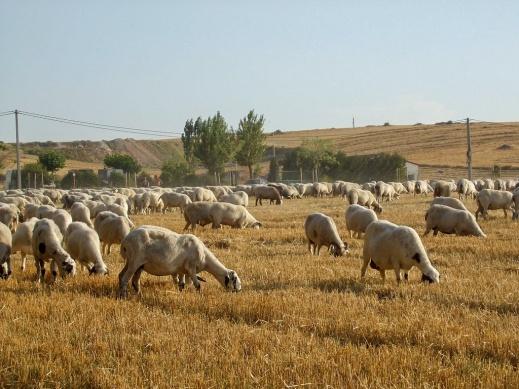 Seguro de retirada y destrucción de animales en explotación