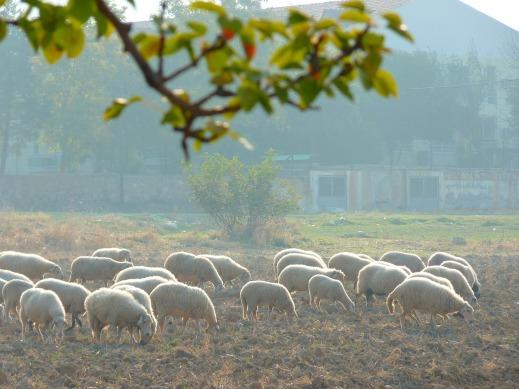 sequía barbechos greening