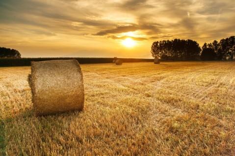 41 Plan Seguros Agrarios combinados