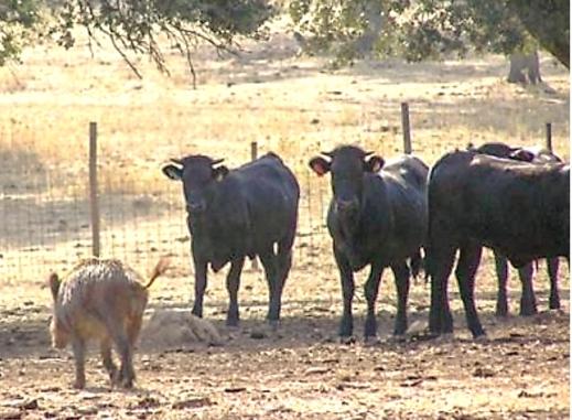 Tuberculosis bovina fauna salvaje