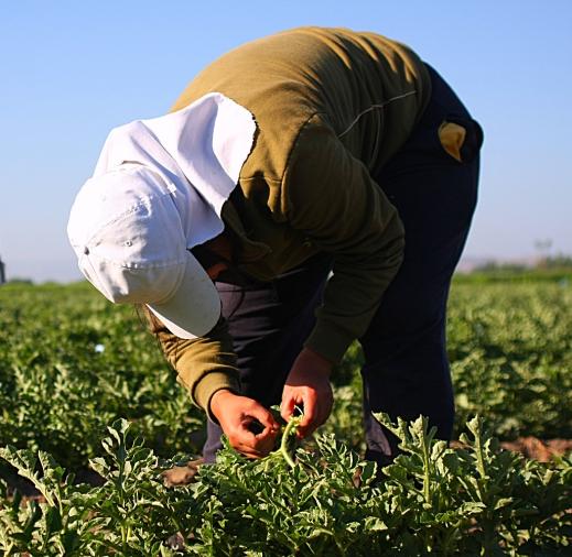 crisis coronavirus agricultura