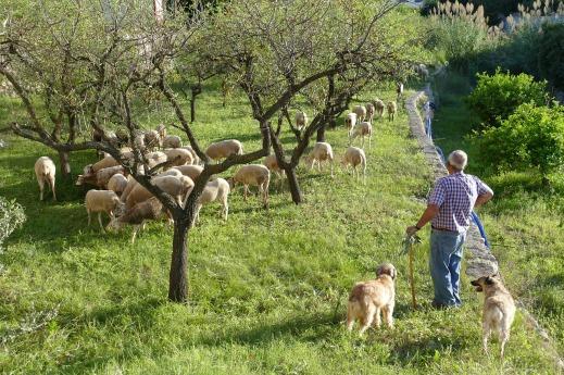 coronavirus agricultura