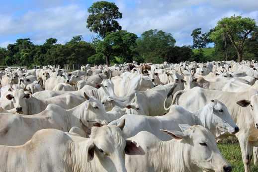 Agricultura Mercosur