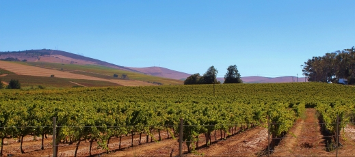 Autorizaciones de viñedo