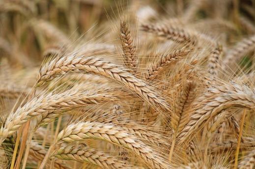 seguro de cultivos herbáceos