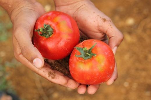 Agenda 2030 agricultura