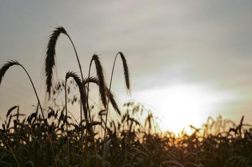 Nutrición sostenible de suelos