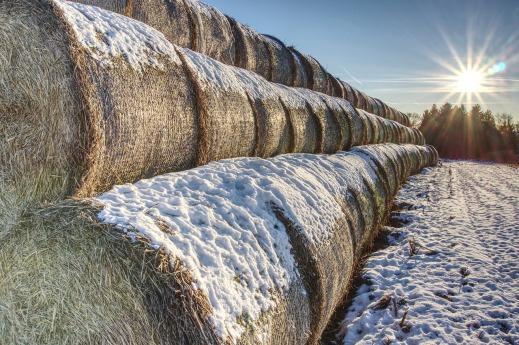 Balance año agrario 2020