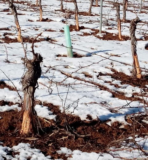 Daños de Caza en los cultivos
