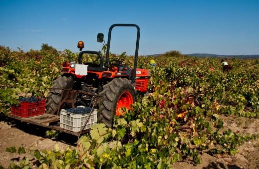 Plan de Apoyo al sector vitivinícola