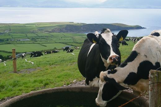 PAC 2020 ayudas asociadas ganadería